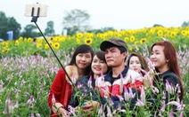 Bạn trẻ nô nức đến cánh đồng hoa hướng dương