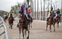 Những dự án trường đua ngựa ngàn tỉ