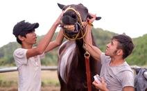 """Hé lộ cơ chế """"mở"""" cho cá cược đua ngựa, bóng đá..."""