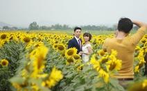 Đầu năm, khách đến cánh đồng hoa hướng dương, đảo chè