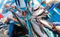 Muốn bán cá ngừ, phải bảo vệ cá heo