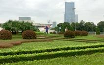 Hà Nội quy định chỉ cắt cỏ vườn hoa, công viên 18 lần/năm