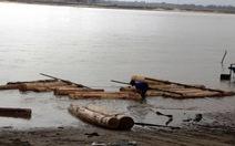 """44 khúc gỗ ươi """"vô chủ"""" kết thành bè trên sông Thu Bồn"""