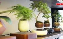 Bonsai bay lơ lửng tại Hà Nội: hàng độc dịp tết