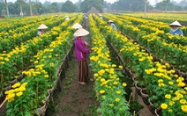 Tuần lễ du lịch Đồng Tháp 2017 khoe sắc hoa trước tết