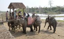 Khổ thân voi quá, đừng bắt voi phục vụ con người