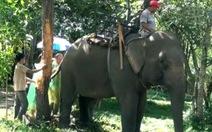 Hạnh phúc của voi