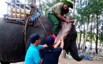 Hành động khẩn cấp để cứu đàn voi Việt Nam