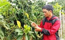 Bắt quả tang 4 người cắt trộm chồi bơ tại Lâm Đồng
