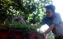 Bonsai, cây ăn trái nhộn nhịp về TP.HCM chuẩn bị bán Tết