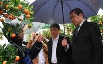 TP Đà Nẵng hỗ trợ tiểu thương chợ hoa tết ế vì mưa