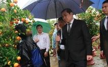 """Đà Nẵng: chợ hoa Tết """"héo"""" trong mưa"""