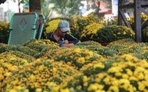 Chủ tịch tỉnh Quảng Ngãi gửi thư kêu gọi mua hoa giúp dân