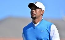 Tiger Woods quyết tâm tìm lại phong độ đỉnh cao