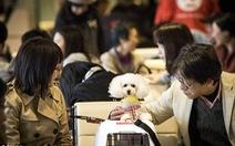 Hàng không Nhật cho phép bạn mang 'cún cưng' lên máy bay