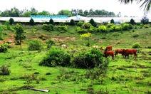 Cấp phép cho Hòa Phát xây nhà máy thép tại Dung Quất