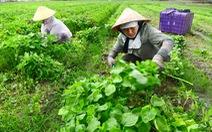 Nông nghiệp sạch chờ gói 100.000 tỉ đồng