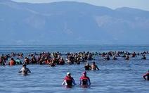 Hàng trăm người chạy đua cứu cá voi mắc cạn