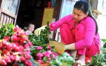 Giá hoa hồng Đà Lạt tăng 6 lần, nông dân phấn khởi