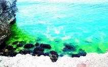 Bất thường nước biển Đen đổi màu xanh