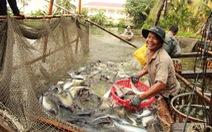 Trung Quốc tăng nhập khẩu cá tra Việt Nam