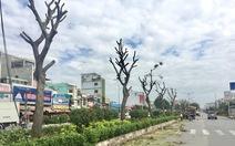 Di dời hàng cây đường Trường Chinh để xây hầm chui An Sương