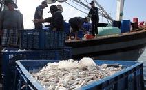Ngư dân Quảng Trị trúng đậm cá cơm