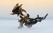 Xem ảnh đại bàng đại chiến tuyệt đẹp