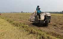 Cần cải tổ Hiệp hội Lương thực Việt Nam