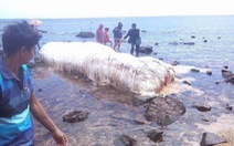 'Quái vật biển' liên tiếp dạt vào bờ Philippines