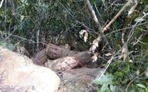 Đình chỉ công tác trạm trưởng để xảy ra phá rừng