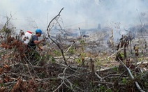 Khoảng 4.700m2rừng phòng hộ Phú Quốc bị thiêu rụi