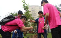 Hà Nội trồng 200 cây hoa anh đào