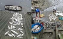Cá chết bất thường nghi do nguồn nước ô nhiễm