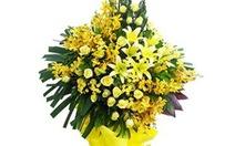 Trung ương Đoàn không nhận hoa, tiếp khách dịp 26-3