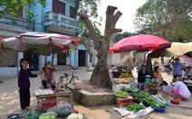 Hà Nội kiểm điểm vụ chặt cây ồ ạt ở xã Cẩm Yên