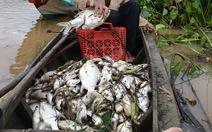 Cá chết trắng ở thượng nguồn sông Sài Gòn, Bình Phước