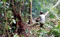 Phát trắng rừng khi chưa có phương án trồng thay thế