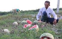 Chưa kiểm soát chất lượng, nông sản khó vào siêu thị