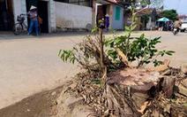 Một huyện ở Hà Nội đã chặt 500 cây xanh khi dọn dẹp vỉa hè