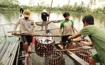 Giá cá tra tăng, người dân lại đua nhau nuôi