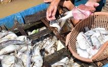 Cá chết trắng thượng nguồn sông Sài Gòn do ô nhiễm