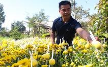 Chàng trai Ê Đê khởi nghiệp với hoa