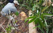 Giám đốc sở xin rút phát biểu vụ chuyển đổi rừng Phú Yên