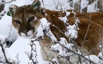 Kiện chính quyền vì muốn giết 120 con sư tử, gấu
