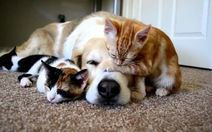 Mua bán và tiêu thụ thịt chó, mèo phải nộp phạt hơn 8.000 USD