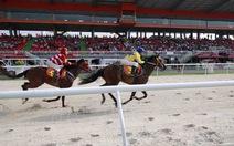 Trường đua ngựa Đại Nam sẽ có cá cược