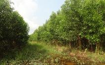 Hơn 11.000ha rừng ở Cà Mau đang ở nguy cơ cháy cấp cao nhất
