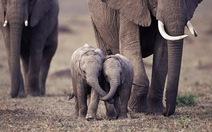 'Tan chảy' với những chú voi con cực dễ thương