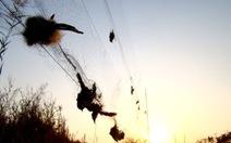 Dùng máy phát 'dụ' chim, giải trí là độc ác?